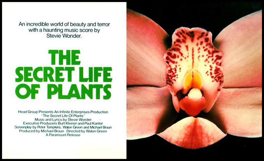 pic from http://www.shockcinemamagazine.com/secretlife.jpg